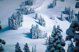 snow_pinetrees